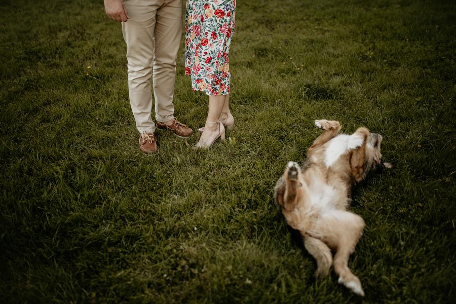 pies na sesji narzeczeńskiej